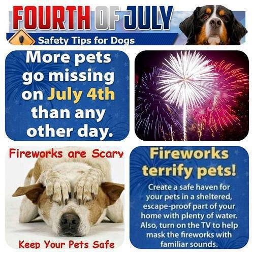 Keeping Your Pet Safe on 4th of July