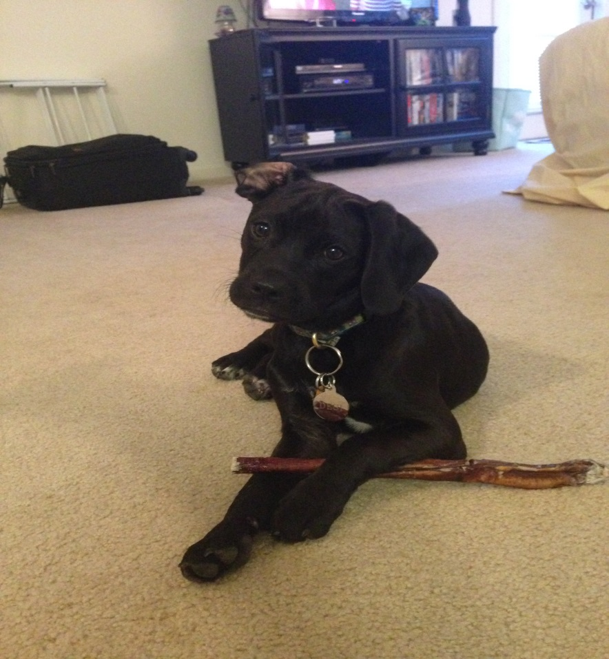 Found!!! Black Puppy has been found and is safe and healthy!