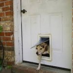 Dog sneaking out