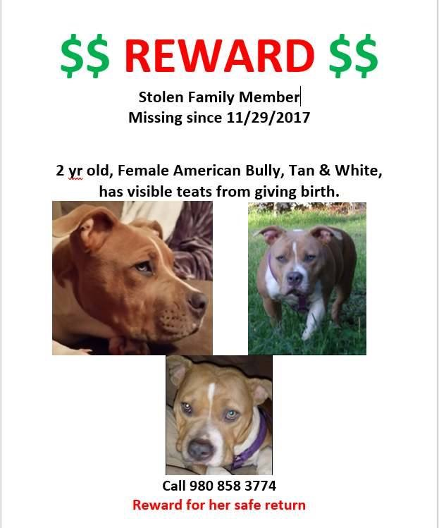 Lola has been recovered!!