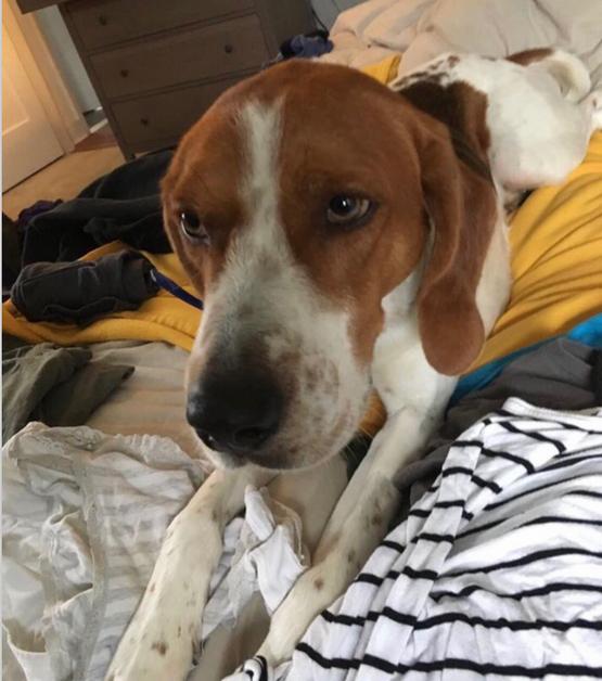 Lost Dog Hunter – Aurora , Illinois