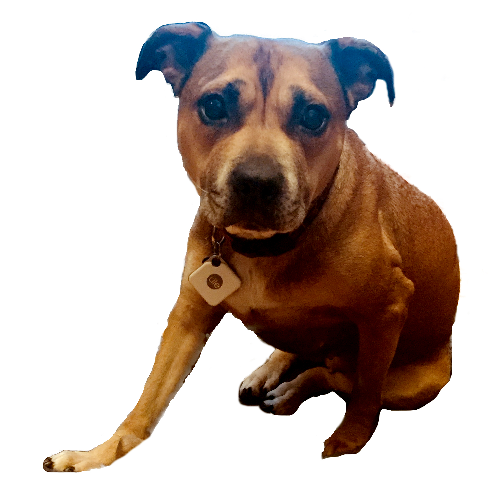 230069116fa Find Lost Dogs, Lost Cats, Missing Pets. The most effective way to ...